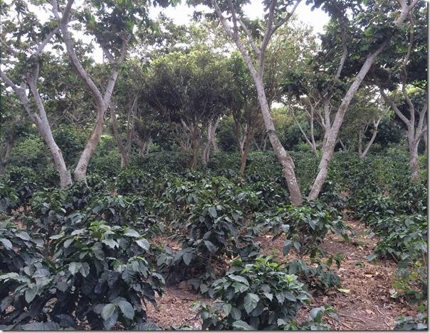 サンタリタ農園3